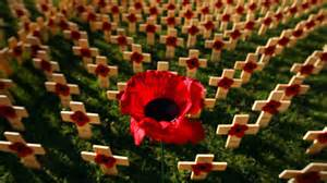 141116 poppy crosses
